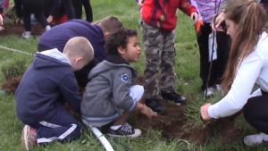 Elementary and high schoolers shake the dirt off of clumps of grass.